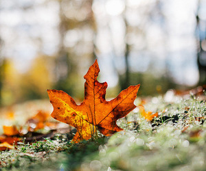 autumn, bokeh, and depth of field image