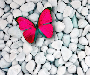 butterfly, pink, and stone image