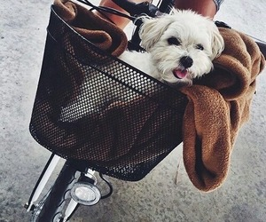 animals, puppy, and tumblr image