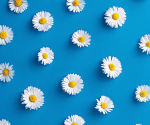 flowers, blue, and patterns image