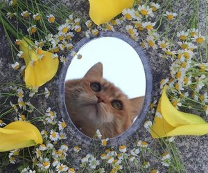cat, aesthetic, and photography image