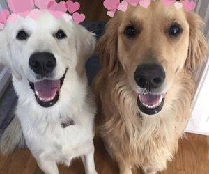 dog, doggy, and tumblr image