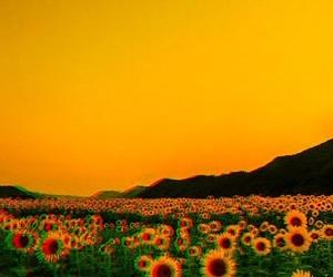 flowers, grunge, and lockscreen image