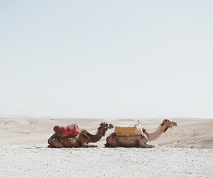camels, desert, and fashion image