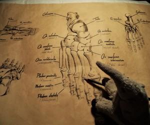 anatomy, bones, and han image