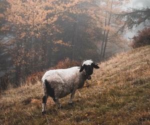 autumn, sheep, and fall image