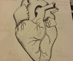 anatomical heart, art, and best friend image