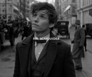 harry potter and newt scamander image