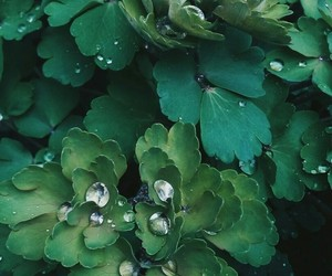 green, dewdrop, and nature image