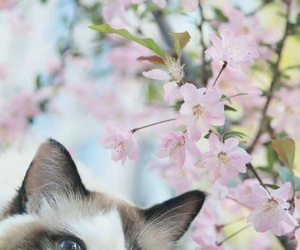 background, blossom, and cat image
