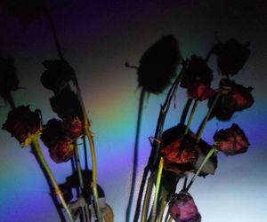 aesthetic, arcoiris, and flower image