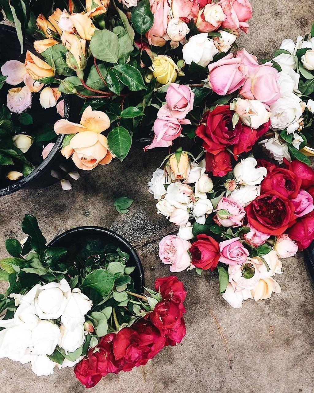 один картинки разбросаны розы все индивидуально