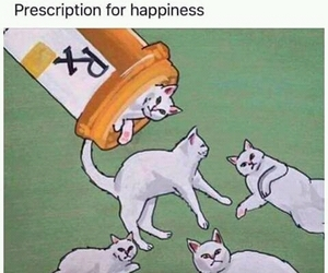 cat, happiness, and funny image