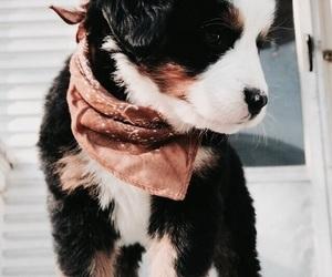 dog, fashion, and inspirations image