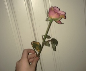 aesthetic, hand, and rose image