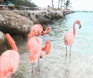flamingo, mar, and paradise image