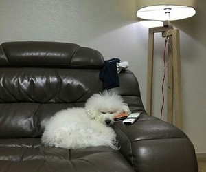 asian, dog, and korean image