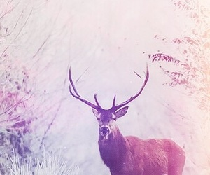 wallpaper, winter, and animal image