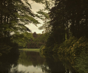 green, river, and wood image