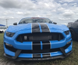 mustang and 5.0 image