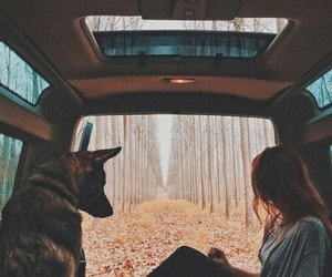 dog, car, and nature image