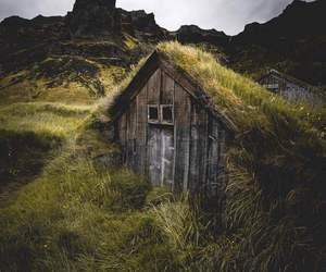 amazing, grass, and nature image