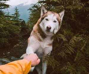 dog, nature, and travel image