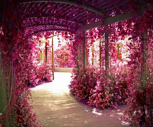 beautiful, beauty, and pink image