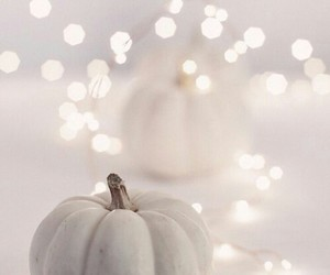 pumpkin, white, and light image