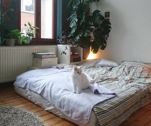 bed, cat, and pet image
