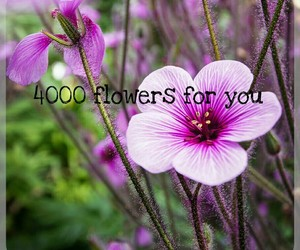 followers, thanks, and 4000 followers image