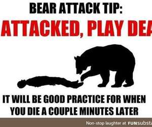 awesome, bear, and humor image