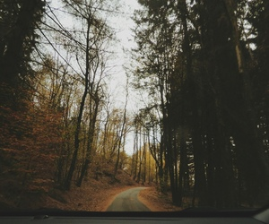 fall, forest, and october image