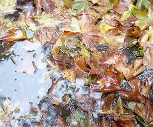 colors, fall, and rainy image