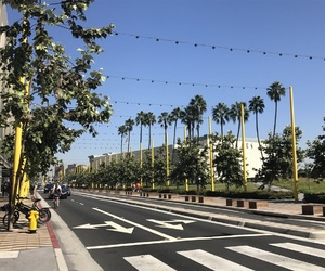 cali, city, and palm trees image