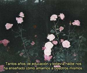 amor, frases, and rose image