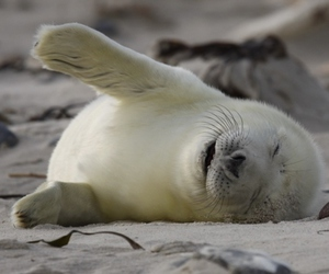 seal and cute image