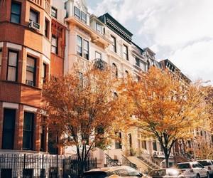 fall, orange, and autumn image