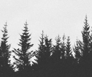 blackandwhite, pines, and wallpaper image