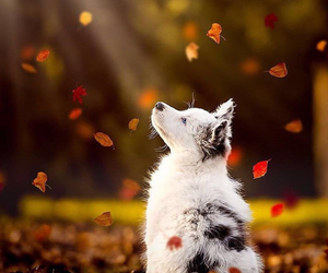 autumn, ❤, and puppy image