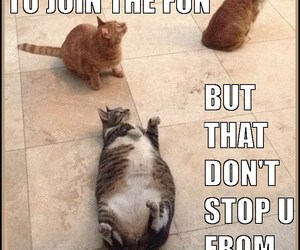 funny cats, too fat, and too funny image