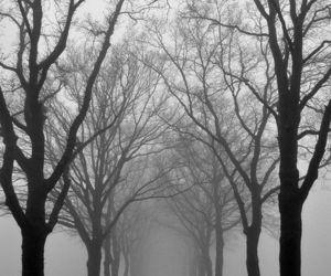 tree, fog, and grey image