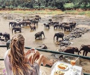 elephant, travel, and breakfast image
