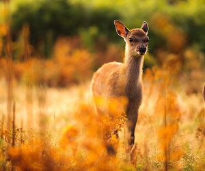 bokeh, deer, and enchanted image