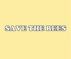 aesthetic, bees, and conservation image