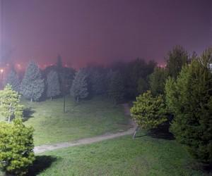 grunge, purple, and tree image
