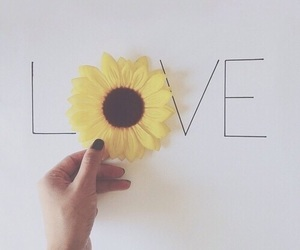 love, flowers, and sunflower image