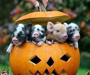 pig, pumpkin, and Halloween image