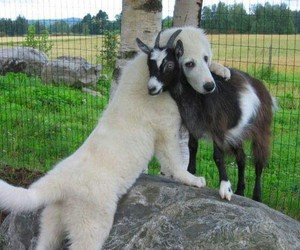 dog, goat, and pals image