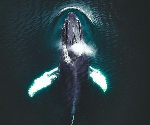 ocean, whale, and beautiful image